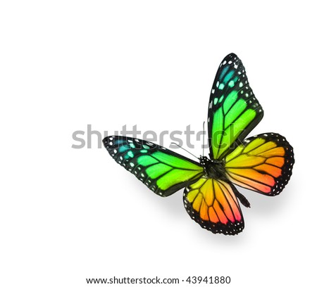 Rainbow Color Butterfly on White Background. Soft shadow underneath. - stock photo