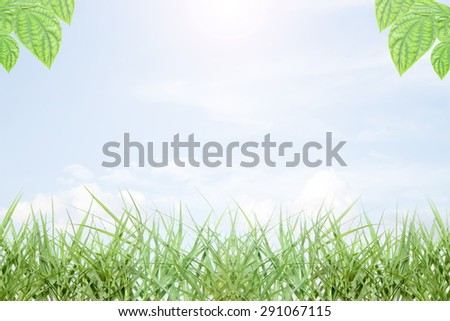 Rainbow,fresh green leaves, natural  background - stock photo