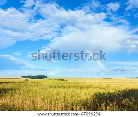 Rainbow in blue cloudy sky above summer wheat field  . - stock photo