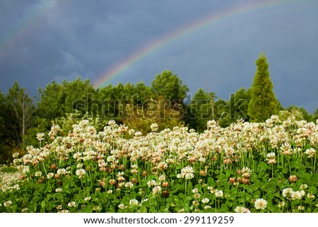 Rainbow in the blue sky over the woods and meadows clover - stock photo