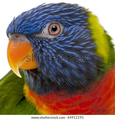 Rainbow Lorikeet, Trichoglossus haematodus, 3 years old, in front of white background - stock photo
