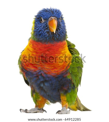 Rainbow Lorikeet, Trichoglossus haematodus, 3 years old, standing in front of white background - stock photo