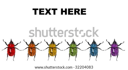 Rainbow of Beetles (Text can go above) - stock photo