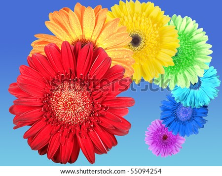 Rainbow of flowers on blue-sky background. Close-up. Studio photography. - stock photo