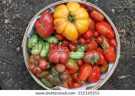Rainbow of tomatoes.  - stock photo