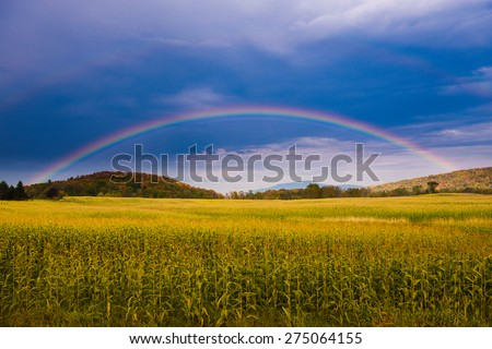 Rainbow over a golden field of corn, Stowe, Vermont, USA. - stock photo