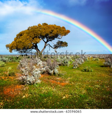 Rainbow over a lone tree - stock photo