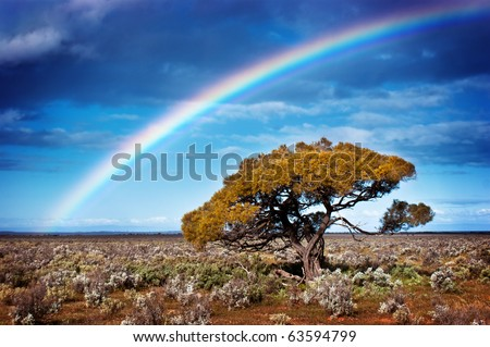 Rainbow over a lone tree in the desert - stock photo