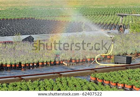 rainbow over a plant nursery (greenery) - stock photo