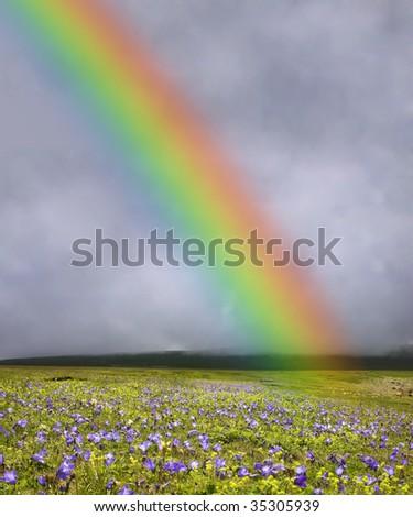 rainbow over flowered field - stock photo