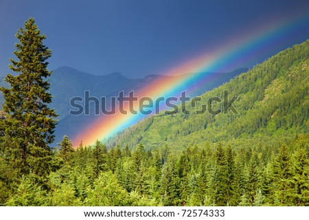 Rainbow over forest at sunset - stock photo
