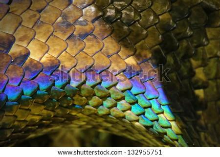 Rainbow snake skin. Malagasy or Madagascar Tree Boa (Boa manditra or Sanzinia madagascariensis) in Ranomafana, Madagascar. Iridescent blue, purple, red scales shine in sun. - stock photo