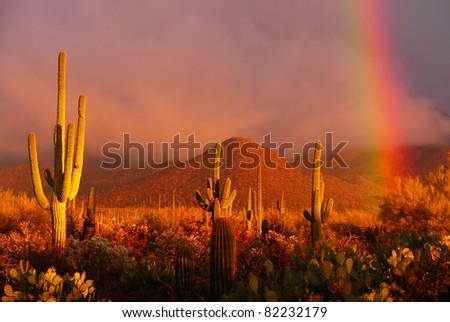 Rainbow sunset at the Saguaro National Park, Arizona, USA - stock photo