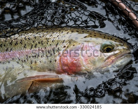 Trout Stock Photos Images Pictures Shutterstock