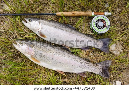 rainbow trout caught by flyfishing in river