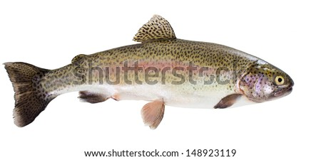 Rainbow trout isolated on a white background - stock photo