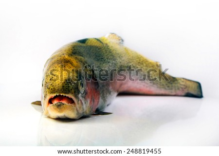 Rainbow trout isolated on white background, , captured with a small depth of field. - stock photo