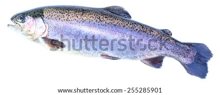 Rainbow trout (Oncorhynchus mykiss) females, isolated on a white background. - stock photo