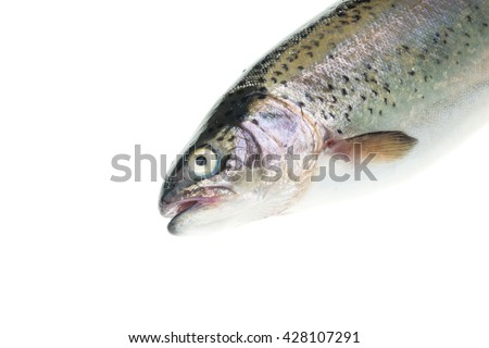Rainbow trout - Oncorhynchus mykiss isolated over white background - stock photo