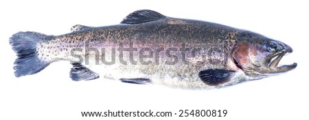 Rainbow trout (Oncorhynchus mykiss) male, isolated on a white background. - stock photo