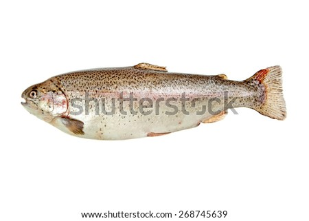 Rainbow trout with opened mouth isolated over white background - stock photo