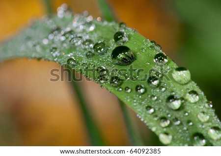 raindrops, blade of grass
