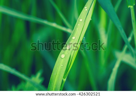 Raindrops on a green leaf in bright daylight - stock photo