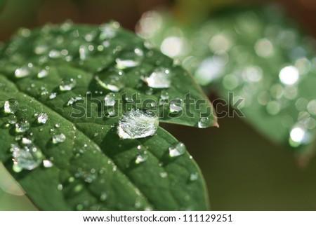 Raindrops on a leaf - stock photo