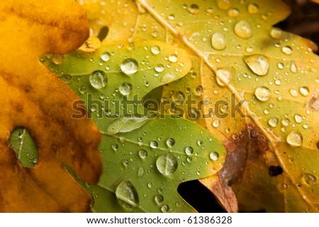 Raindrops on fallen autumn leaves - stock photo