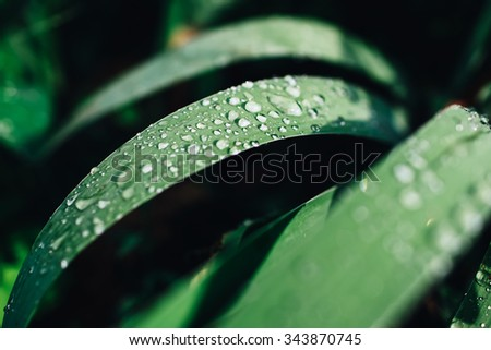 Raindrops on green leaves - stock photo