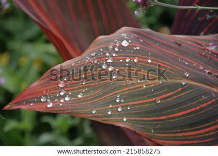 raindrops on leaf - stock photo