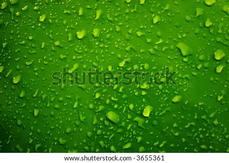 Raindrops on the green - stock photo