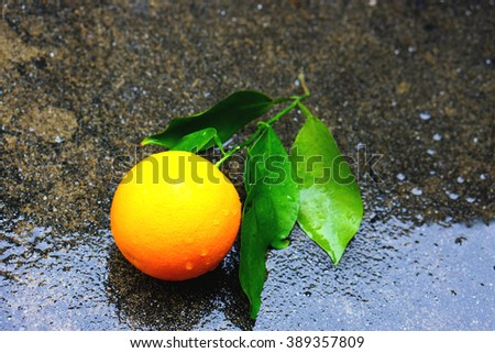 Raindrops, Tree leaf after the rain, orange tree after rain   - stock photo