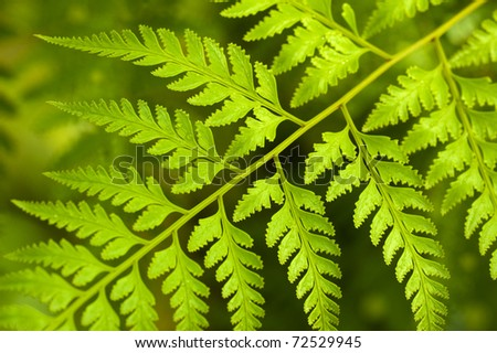 Rainforest after the rain in a morning - stock photo