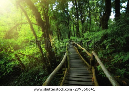Rainforest at angka nature trail in doi inthanon national park Chiang mai thailand - stock photo