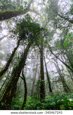 Rainforest at Doi Inthanon National Park in Chiang Mai, Thailand. - stock photo