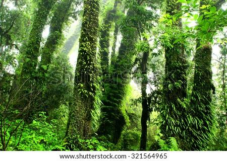 Rainforest at Inthanon Mountain, Chiang Mai, Thailand - stock photo