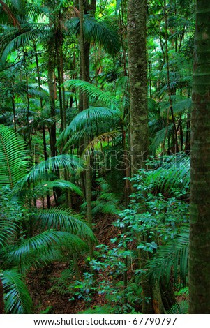 rainforest at Mount Warning, New South Wales, Australia - stock photo