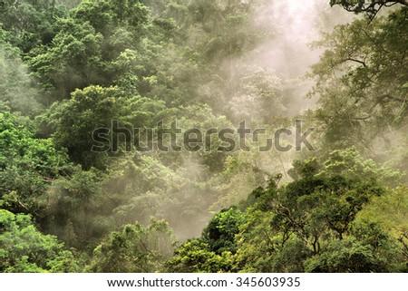 rainforest at the Barron Gorge National Park, Cairns, Queensland, Australia - stock photo