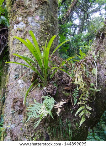 Rainforest Bromeliad - stock photo