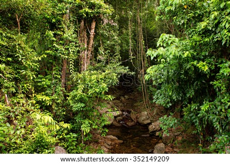 rainforest creek, near Cairns, North Queensland, Australia - stock photo