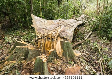 Rainforest destruction in the Ecuadorian Amazon - stock photo