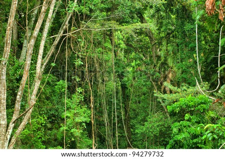 rainforest east of Mareeba, Far North Queensland, Australia - stock photo