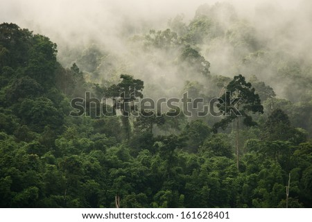 Rainforest Fog - stock photo