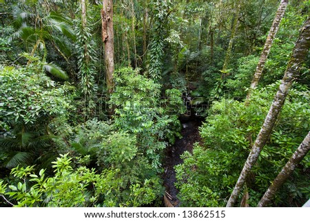 Rainforest from above