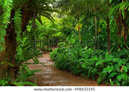 Rainforest garden path, North Queensland, Australia