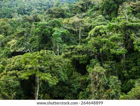 rainforest in Malaysia - stock photo