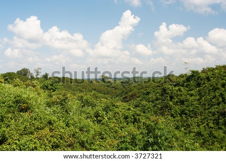 Rainforest in Myanmar - stock photo