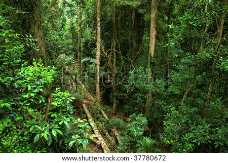 rainforest in New South Wales, Australia - stock photo