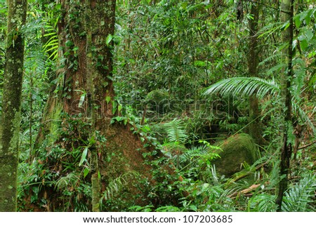 rainforest in North Queensland, Australia